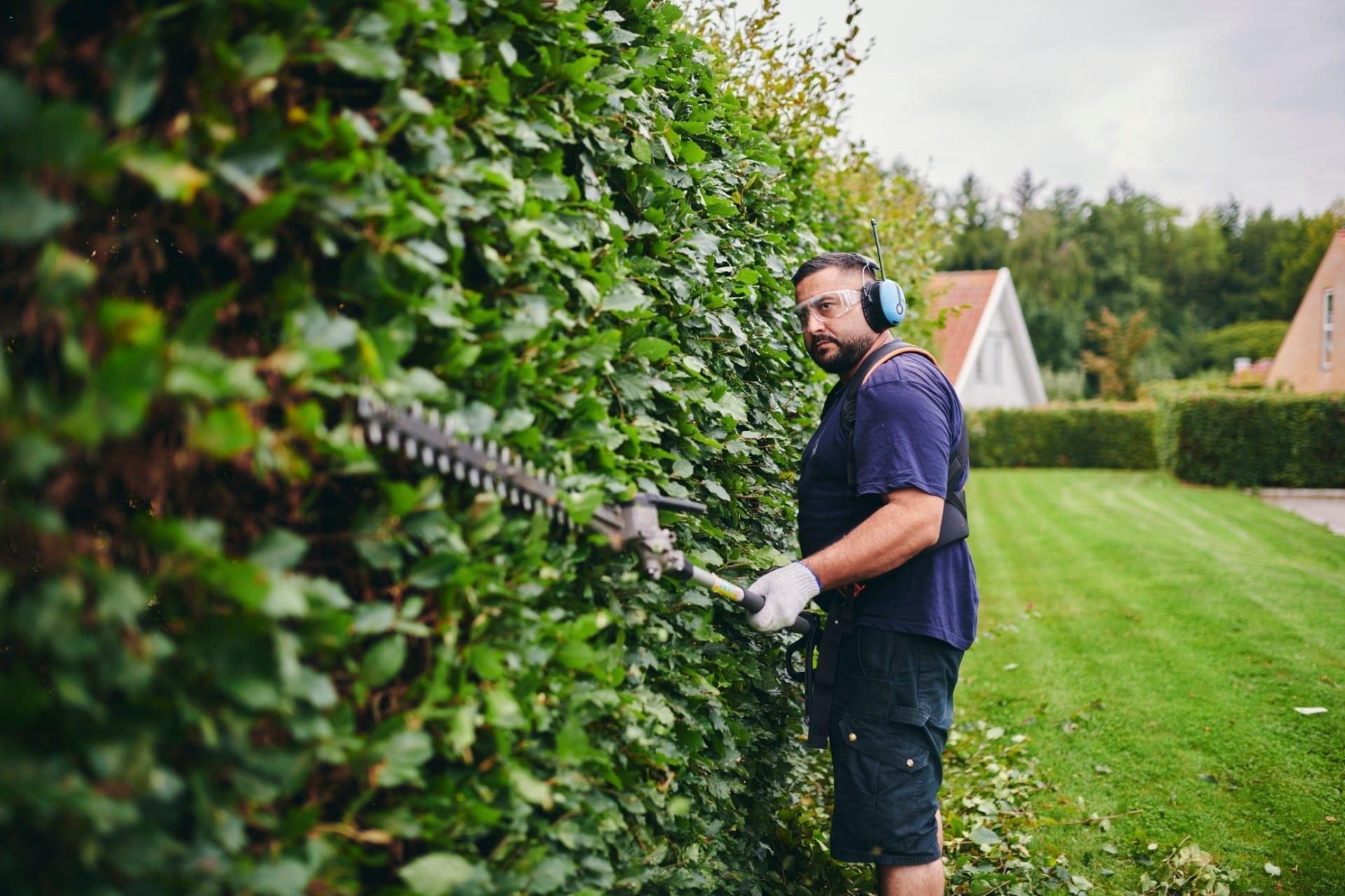 Renell-havemand klipper hæk med høreværn på